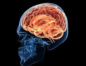 3 cerebro-placer-dolor