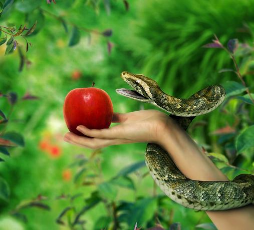 1 manzana