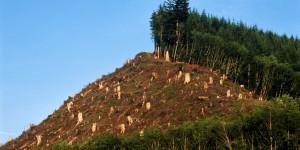 2 deforestacion