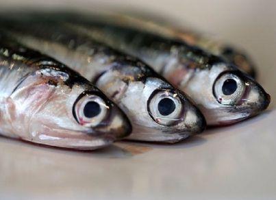 pesc 4