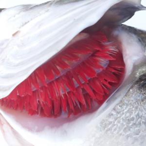 pesc 5
